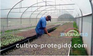 cultivo protegido