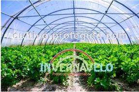 cultivo de hortalizas en macrotunel