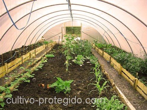 cultivos protegidos dentro de macrotunel