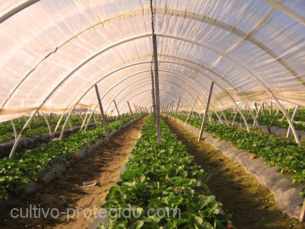 Proteger tus cultivos ayuda a que estos sean menos propensos a fitopatógenos