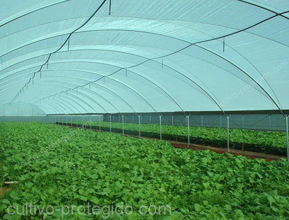 macro tunel invernavelo instalado sobre cultivos