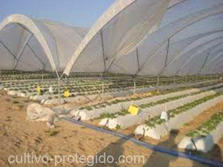 Macrotunel agricola instalada en campo para proteccion de frutos