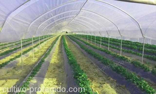 Los invernaderos le brindan protección a sus cultivos contra la lluvia, las inclemencias del clima, los insectos y las aves.
